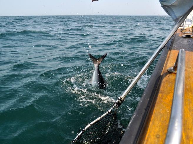 Fishing, summer 2012
