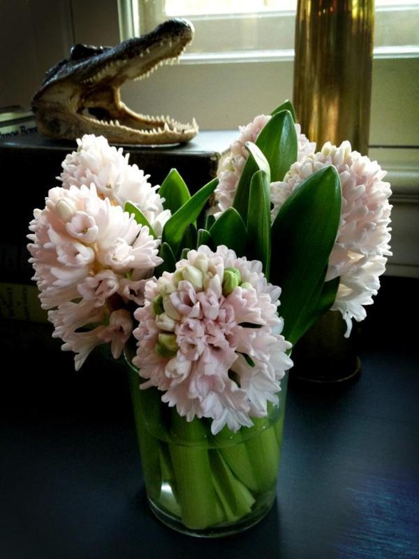 Pale pink hyacinth.