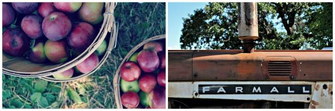 apples+tractor