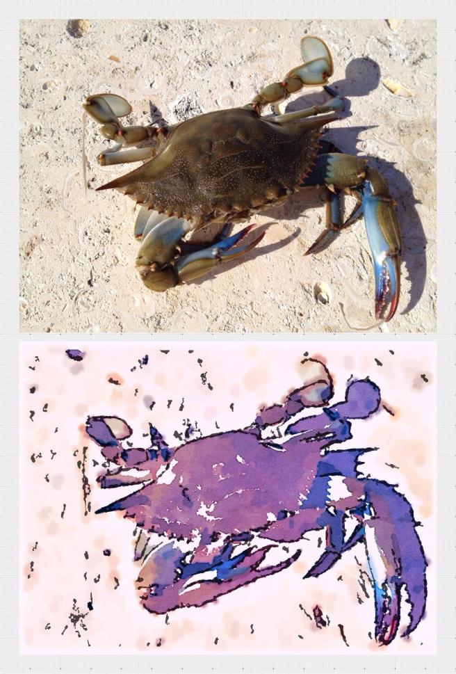 Surprise catch, Vero Beach