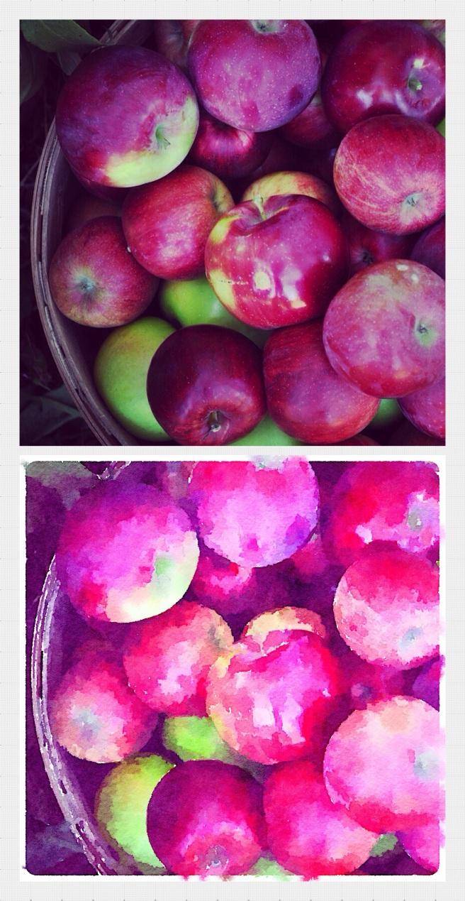 Apple picking, Wisconsin